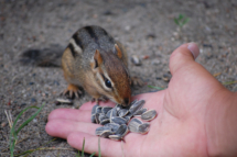 feed_the_chipmunks_20111226_1131213295