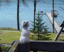 snowman_contest_20111226_1172317576