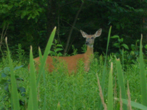 wildlife_viewing_20120801_1759862074